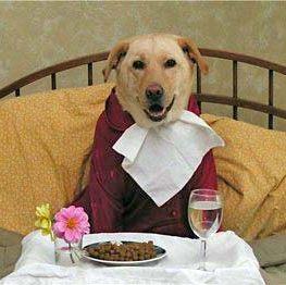Mangiare da cani. Magari!