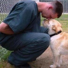 """""""Orme oltre le mura"""": gli animali a fianco dei detenuti"""