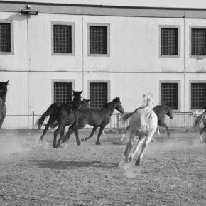 Verona: dalle celle alle stalle, quando i cavalli aiutano i detenuti