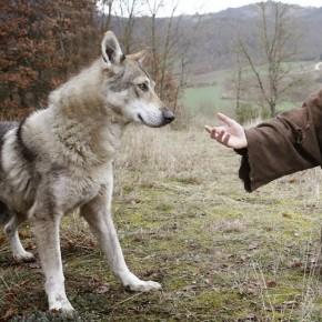 50 anni tra i lupi